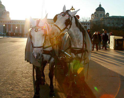 horses in Vienna