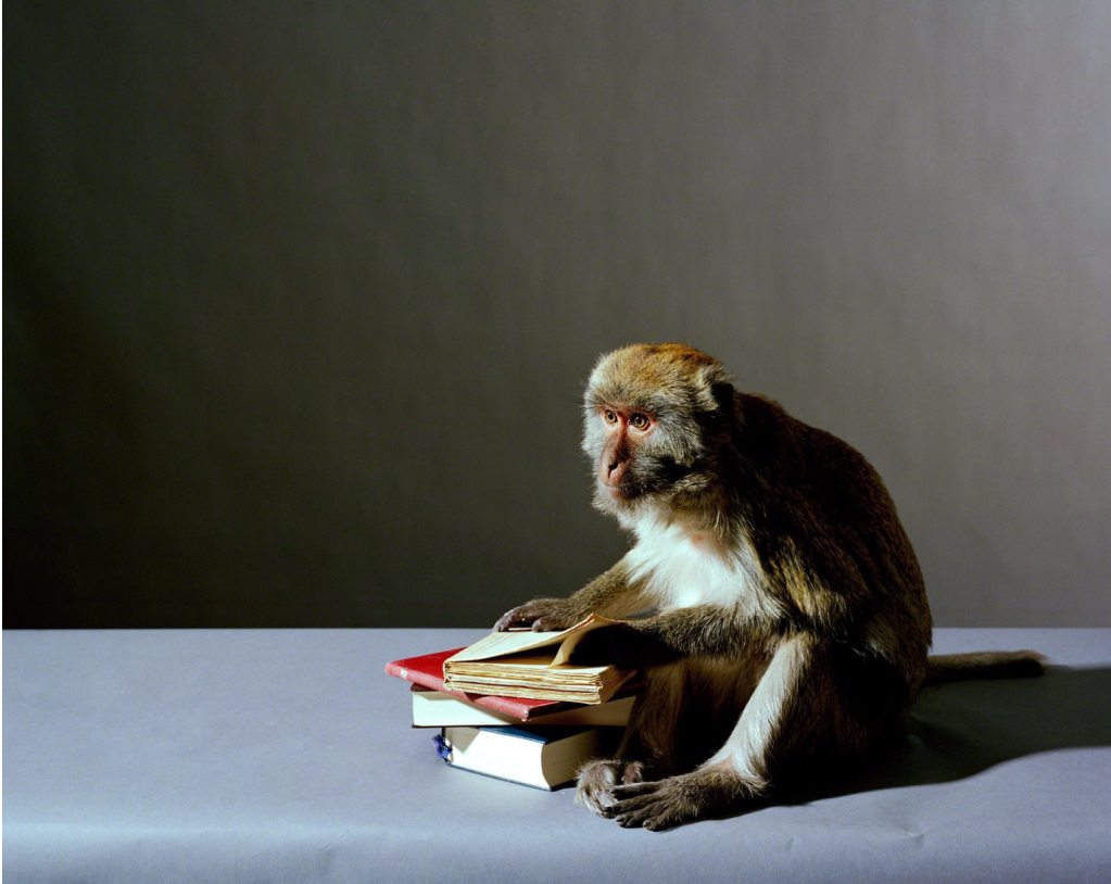 Olivier Richon. Portrait of a monkey with books, 2008. C-type print, 91 x 115 cm.