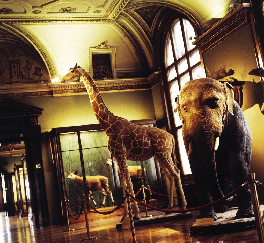 Museum of Natural History, Vienna, ©WienTourismus / Daniela Stallinger
